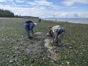 Filling in clam hole at Birch Bay State Park
